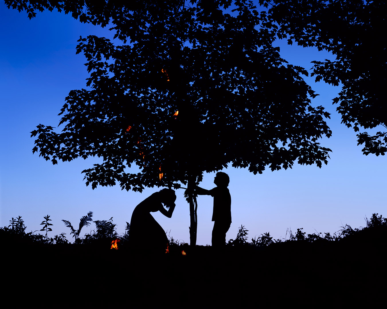 As he shook the tree, burning leaves fell on her, 2009